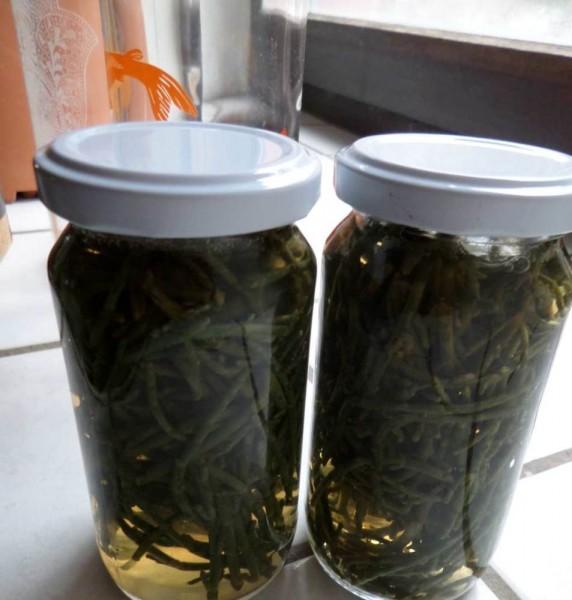 Salzgras, Meeresspargel, Salicorne, Glas 50g eingelegt Roh